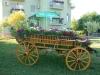 Interesantna cvetna dekoracija u dvorištu